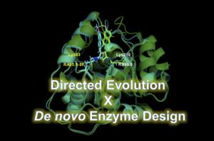 Directed Evolution と De novo 酵素デザインを組合わせた研究例