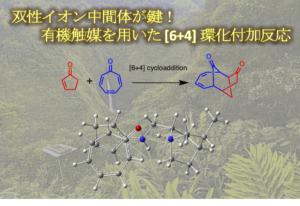 双性イオン中間体が鍵!有機触媒を用いた [6+4] 環化付加反応