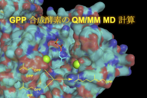 GPP 合成酵素の QM/MM MD 計算